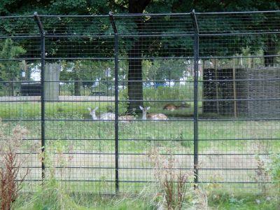 animais clissold park