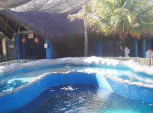 Projeto Tamar - Oceanário de Aracaju