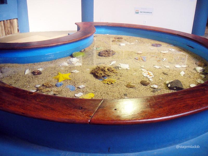 Projeto Tamar - Oceanário de Aracaju - Tanque