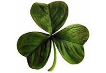 saint patrick day irish clover