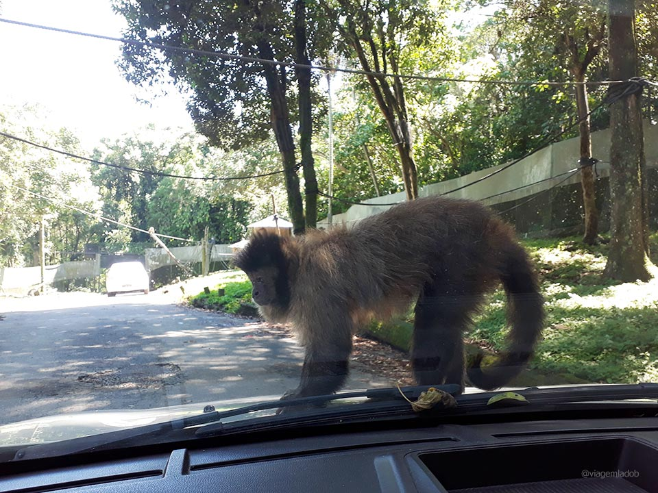 Macaco no carro - Zoo Safari - SP
