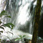Parque da Cantareira - Trilhas e Cachoeiras em São Paulo
