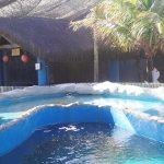 Projeto Tamar - Oceanário de Aracaju em Sergipe