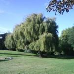 Parques em Londres - Springfield Park